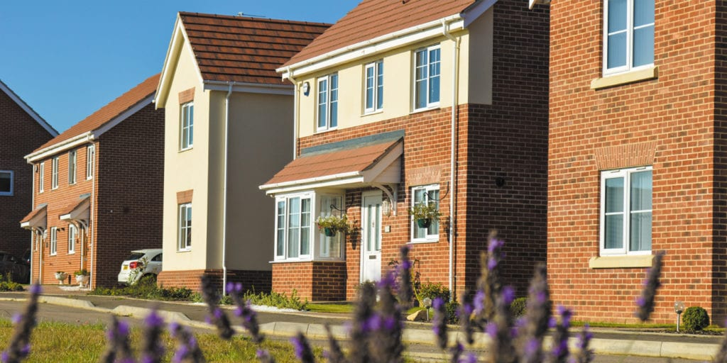 Photograph of new homes with purple lavender flowers in the foreground